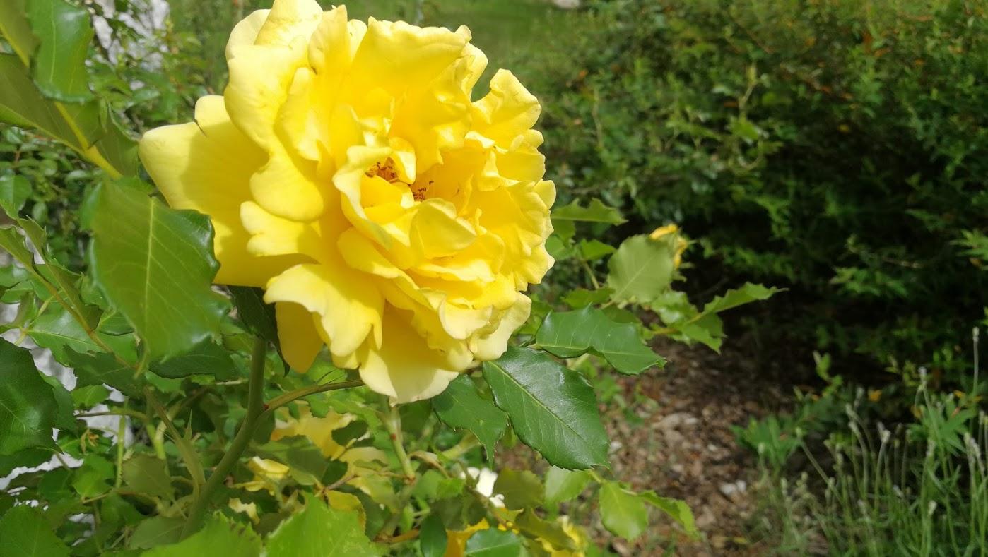 I petali di rosa – Villa Rizzi
